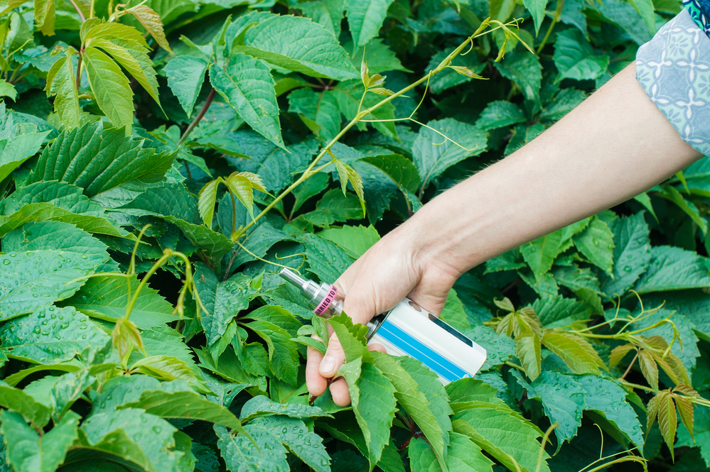 Person inspecting a plants