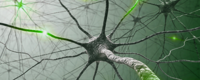 neurons in green a accented colours