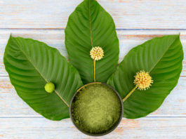 Leaves, flowers, fruits and liquid of Kratom or mitragynine on wooden background. The leaves eaten as a drug It is a medicinal plant and is addictive.